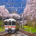 御殿場線普通列車と桜のトンネル。。20170410(^^)