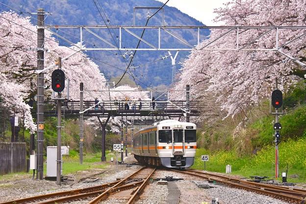 桜のトンネル向けて山北駅へ。。御殿場線 20170410