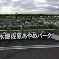 撮って出し。。見頃迎えた水郷佐原あやめパーク。。(^^) 6月11日
