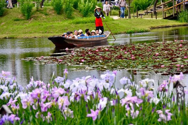 綺麗な水に咲く花菖蒲と渡瀬舟 20170611