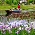 写真: 綺麗な水に咲く花菖蒲と渡瀬舟 20170611