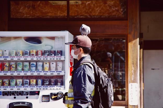 撮って出し。。鎌倉鶴岡八幡宮 鳩の定位置。。1月27日