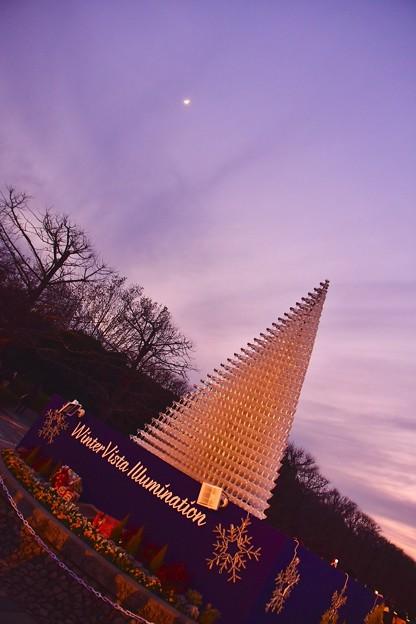 月とシャンパングラスツリー。。昭和記念公園Winter  Vista illumination 20171223