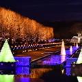 昭和記念公園いちょうの木々もライトアップされて。。WinterVista illumination 20171223