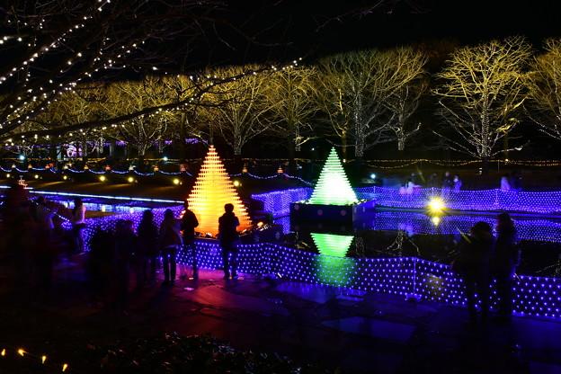 昭和記念公園カナール噴水広場 シャンパングラスツリー光の演出 20171223