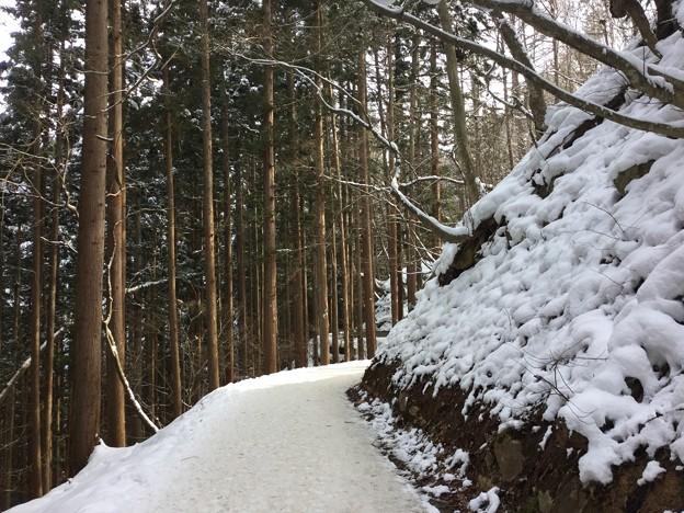 撮って出し。。地獄谷へ向かう長い道のりの雪の林道 2月3日