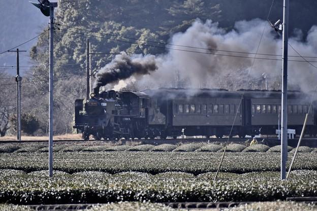 遠くから聞こえる警笛 静岡の名産茶畑をSL C5644。。20180120