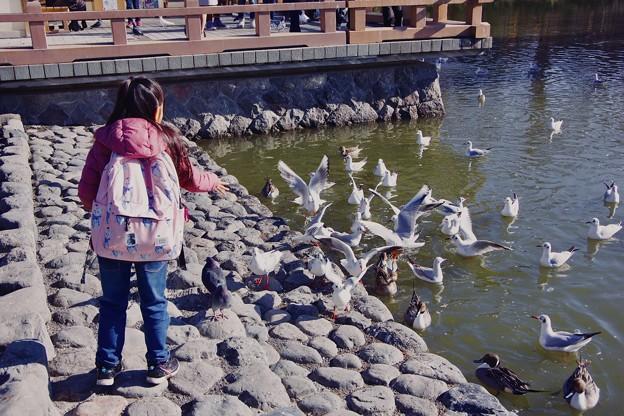 古都鎌倉鶴岡八幡宮。。人懐っこい鳥たち。。20180127