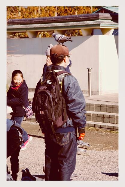 古都鎌倉鶴岡八幡宮。。鳩の憩いの場。。20180127
