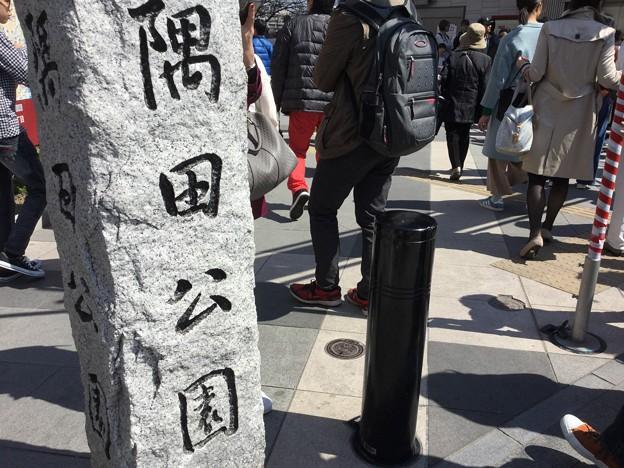 撮って出し。。お次の桜散策ハシゴは浅草隅田公園へ 3月25日