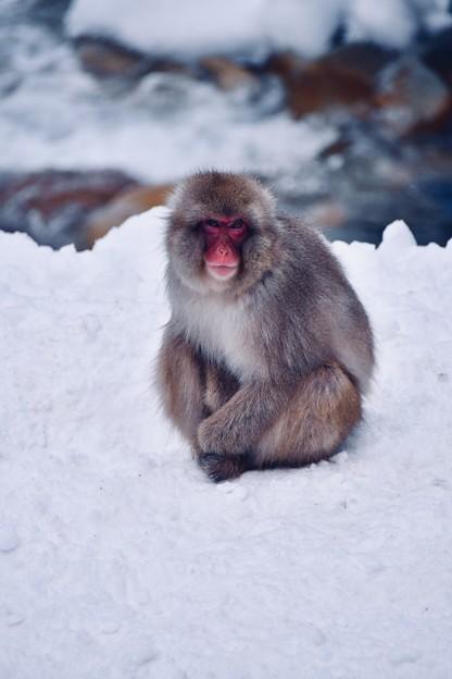 雪で冷えきって。。野猿公苑のお猿さん
