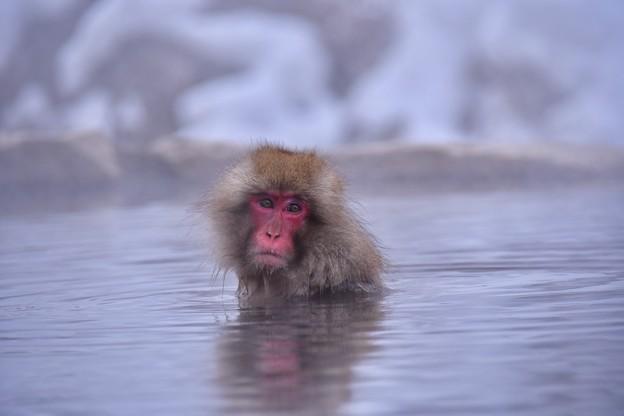 いい湯です。。野猿公苑のお猿さん 20180203