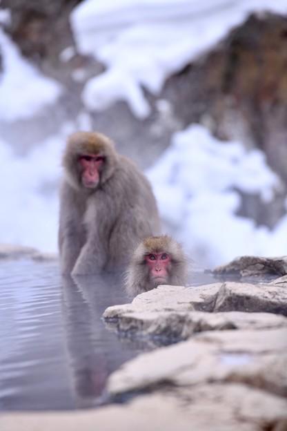 お手手温めるお猿と温泉に浸かるお猿さん 20180203