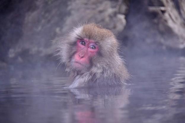 湯けむりの温泉に。。野猿公苑のお猿さん 20180203