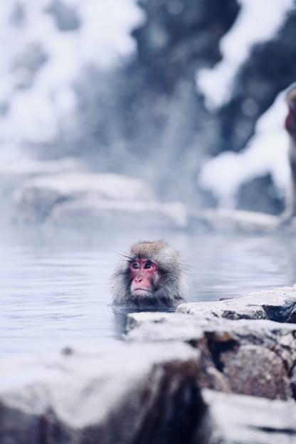外は小雪舞う。。湯けむりの中のお猿さん 20180203