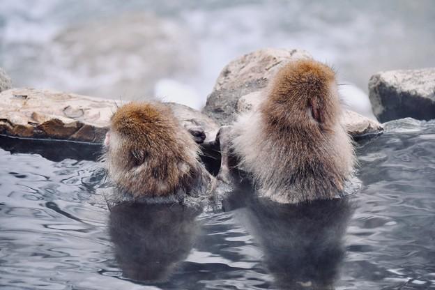 兄弟仲良く温泉入るお猿さん。。野猿公苑 20180203