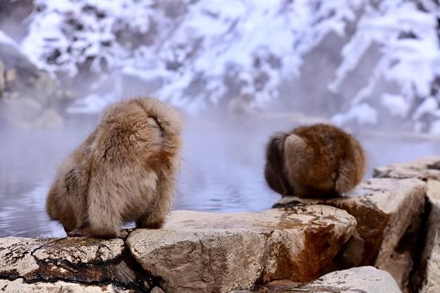 水飲むスタイル。。(^_^;)。。野猿公苑 20180203