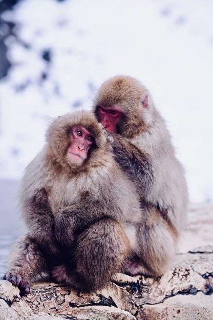 兄弟仲良し(^^) 野猿公苑 20180203