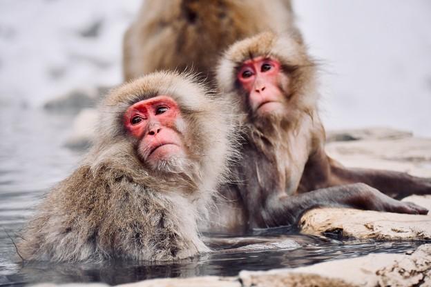 カメラに目線やるお猿さん。。(^^)20180203