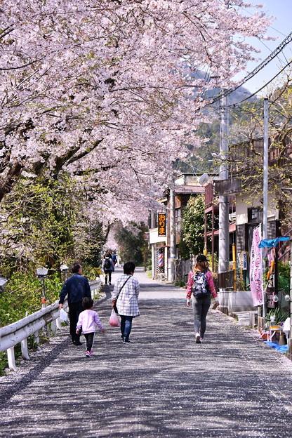 Photos: 桜散り始めも。。山北町の桜風景 3月31日