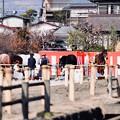 写真: 流鏑馬に参加する馬たち。。小田原曽我梅林 20180211