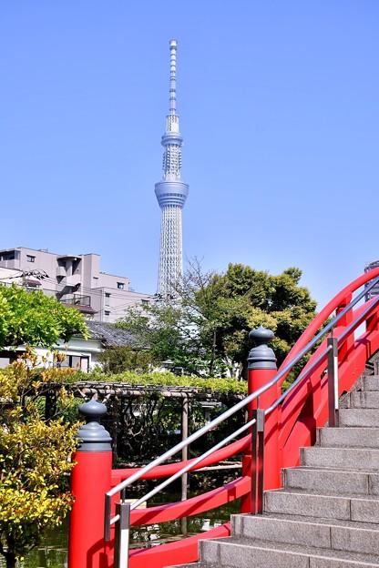 撮って出し。。亀戸天神から見える東京スカイツリー 4月22日