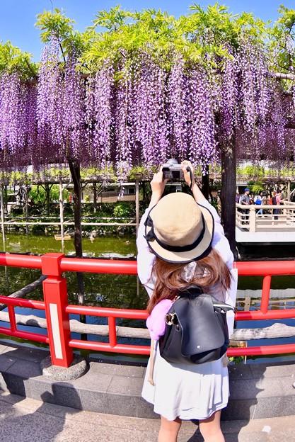 撮って出し。。亀戸天神 最後の藤の花を夢中に撮る女子 4月22日