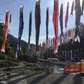 Photos: 撮って出し。。2年ぶりの神流町鯉のぼりへ 4月30日
