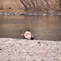Photos: 山口県岩国の錦帯橋河川敷の風景 20180219