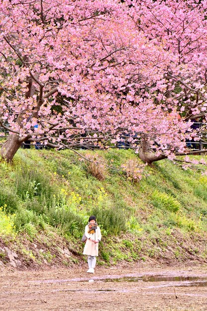 Photos: 自撮り女子。。河津町の河津桜 20180306