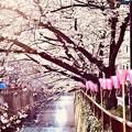 Photos: 目黒川桜まつりらしい天気。。(2)  20180325