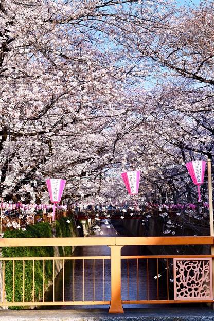 目黒川桜まつりらしい天気。。(3)  20180325