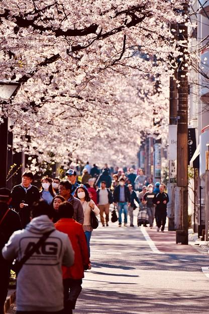 目黒川桜まつりらしい朝の風景 20180325