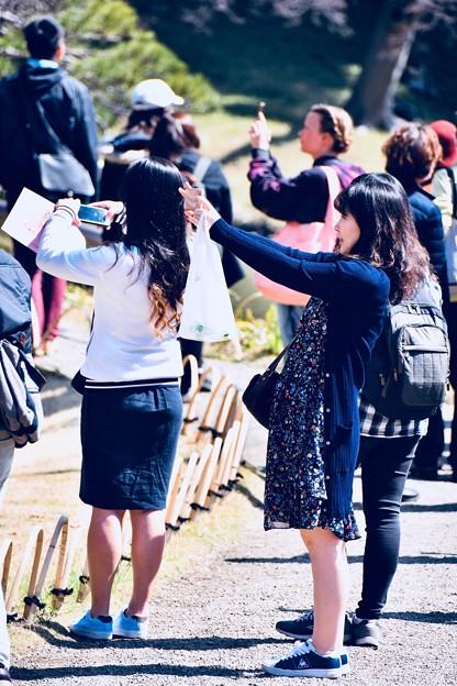 小石川後楽園。。見中で枝垂れ桜を撮影するカメラ女子達 20180325