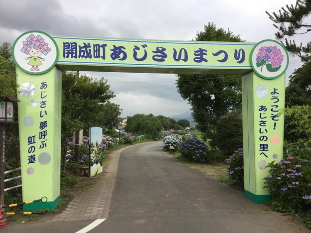 写真: 撮って出し。。あじさいの里へ開成町の紫陽花を撮りに。。6月10日