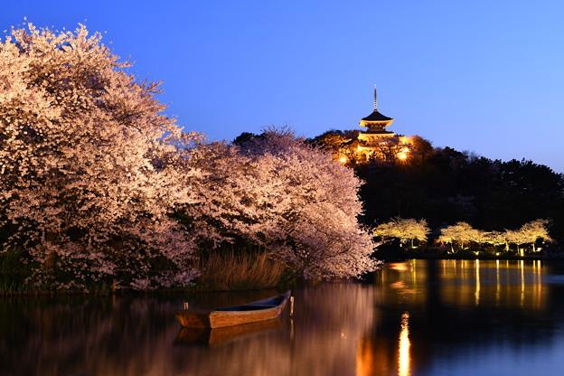 夜桜の横浜三渓園。。(1) 20180330