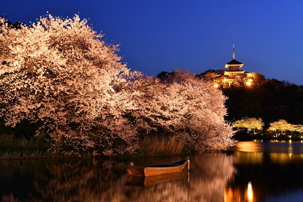 夜桜の横浜三渓園。。(2) 20180330