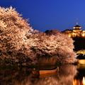 写真: 夜桜の横浜三渓園。。(2) 20180330