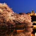 Photos: 夜桜の横浜三渓園。。(2) 20180330