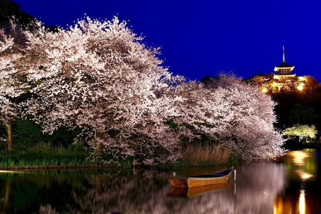 夜桜の横浜三渓園。。(3) 20180330