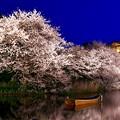 写真: 夜桜の横浜三渓園。。(3) 20180330