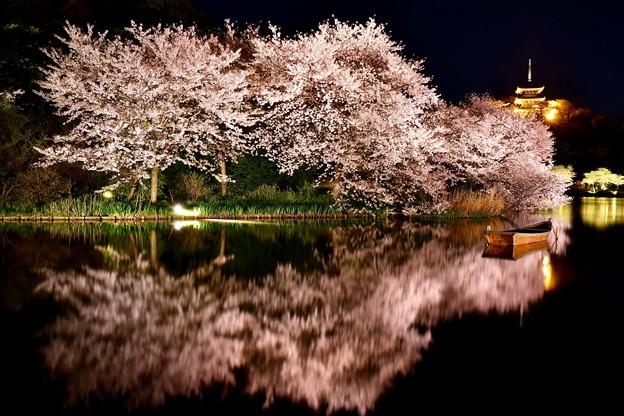 Photos: 水面に映り込む夜桜。。横浜三渓園(1)  20180330