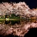 写真: 水面に映り込む夜桜。。横浜三渓園(1)  20180330