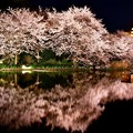 水面に映り込む夜桜。。横浜三渓園(1)  20180330