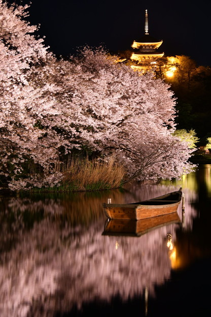 水面に映り込む夜桜。。横浜三渓園(2)  20180330