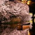Photos: 水面に映り込む夜桜。。横浜三渓園(2)  20180330