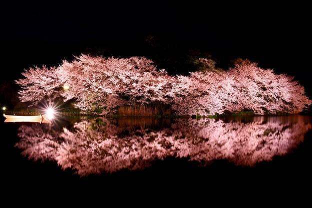 Photos: 静寂な夜の三渓園。。水面に写る夜桜(2) 20180330