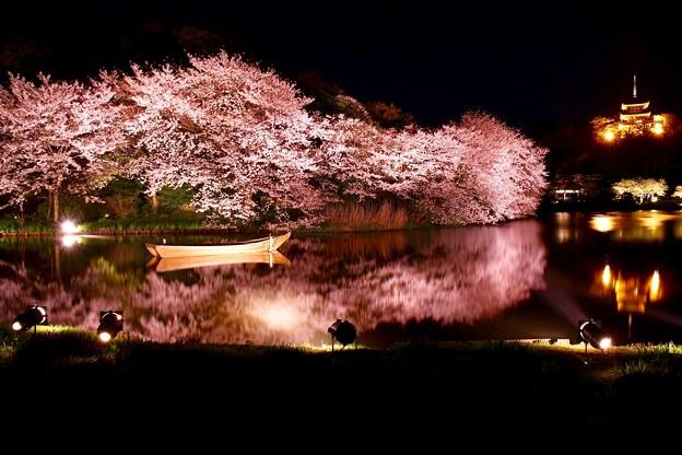 静寂な夜の三渓園。。水面に写る夜桜(3) 20180330