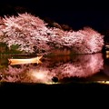 Photos: 静寂な夜の三渓園。。水面に写る夜桜(3) 20180330