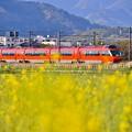 写真: 夕暮れの開成町 オレンジ色のロマンスカーGSEと黄色い菜の花(1)  20180407
